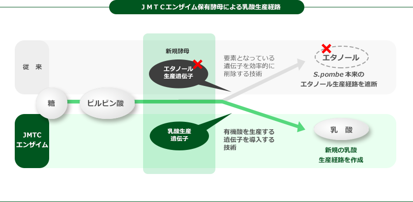 JMTCエンザイム保有酵母による乳酸生産経路